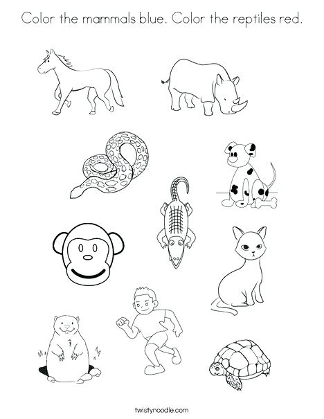 468x605 Reptiles Coloring Pages Coloring Pages Of Reptiles Color