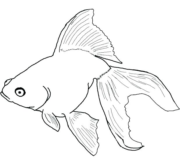 Blue Fish Coloring Pages