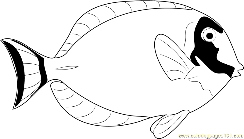 800x456 Powder Blue Surgeonfish Coloring Page