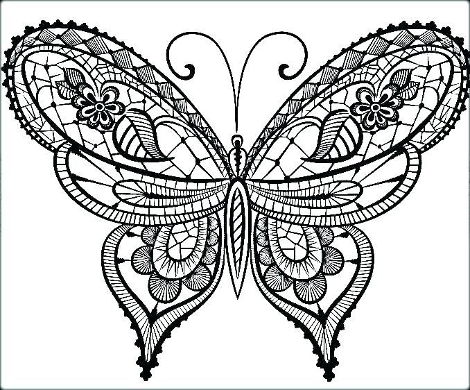 678x562 Coloring Page Of Butterfly Common Butterfly Coloring Page Blue