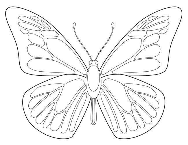 650x502 Free Butterfly Printable Butterfly, Butterfly Drawing