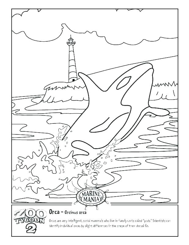 618x800 Blue Whale Coloring Pages Whale Big Blue Whale Coloring Page