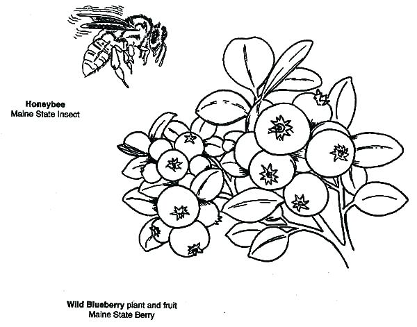600x471 Blueberry Coloring Page Blueberries Coloring Page B Is