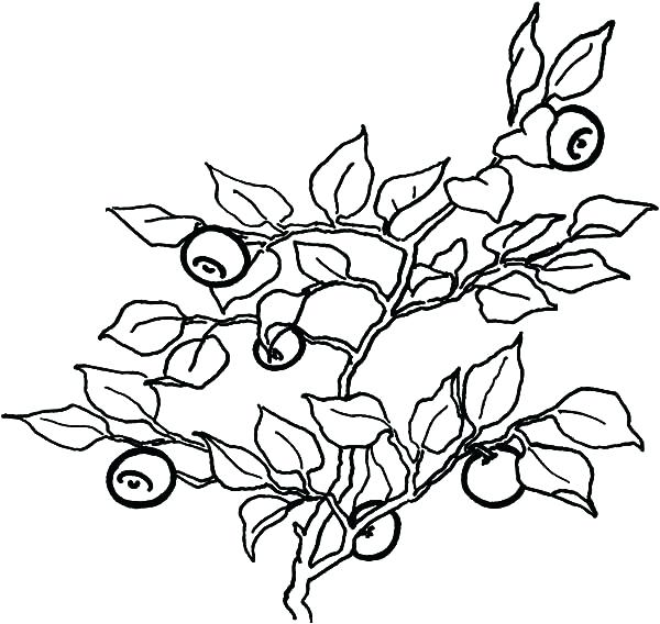 600x568 Blueberry Coloring Page Muffin Coloring Page Amazing Muffin