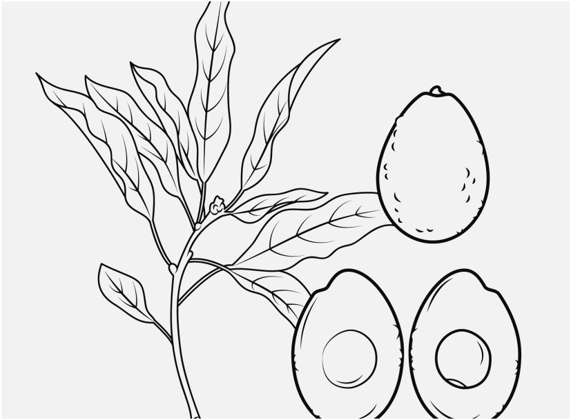 827x609 Blueberry Coloring Pages Free View Avocado Coloring Page