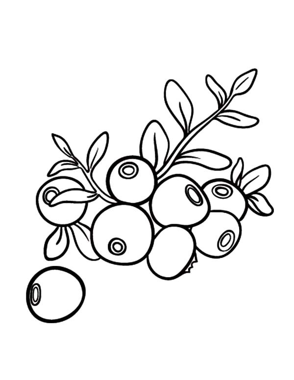 600x776 Lots Of Blueberry Bush Coloring Pages Best Place To Color
