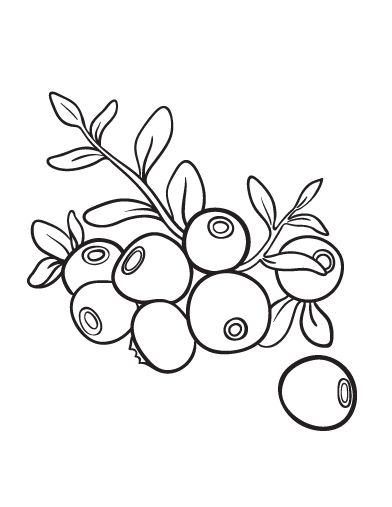392x507 Printable Blueberry Coloring Page Free Pdf Download