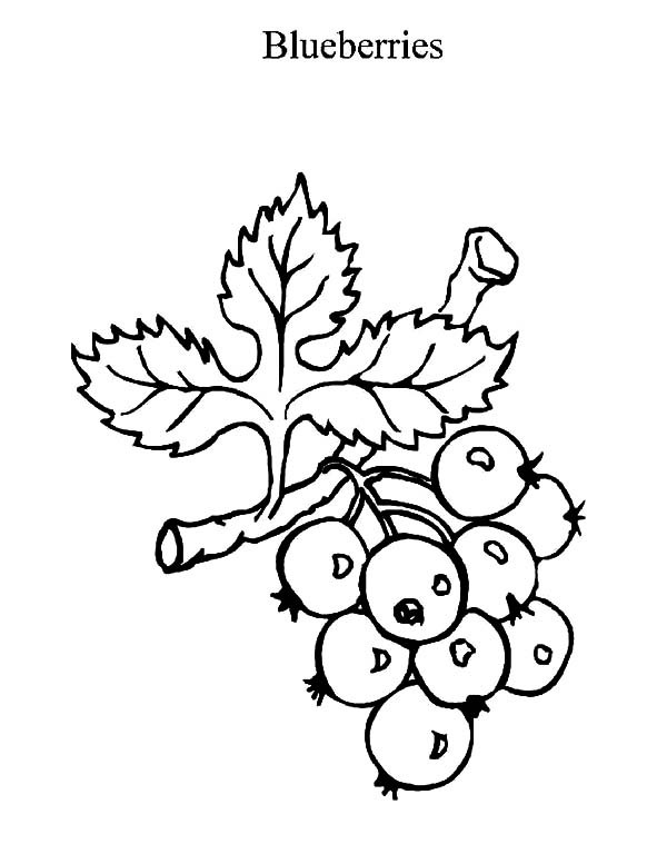 600x777 Blueberry Bush In The Garden Coloring Pages Best Place To Color
