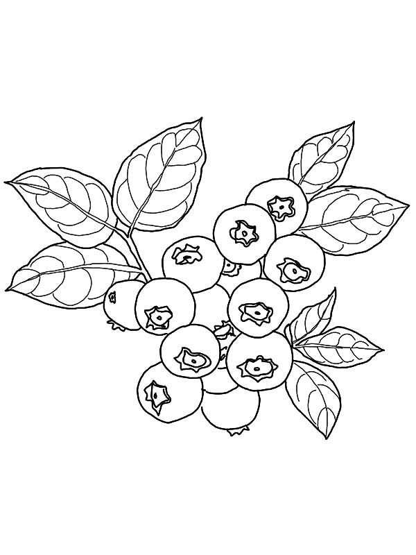 600x800 Blueberry Coloring Page
