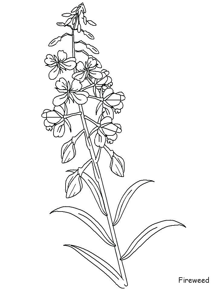 718x957 Bluebonnet Flower Coloring Page Blue Pretty Pages Online Mandala