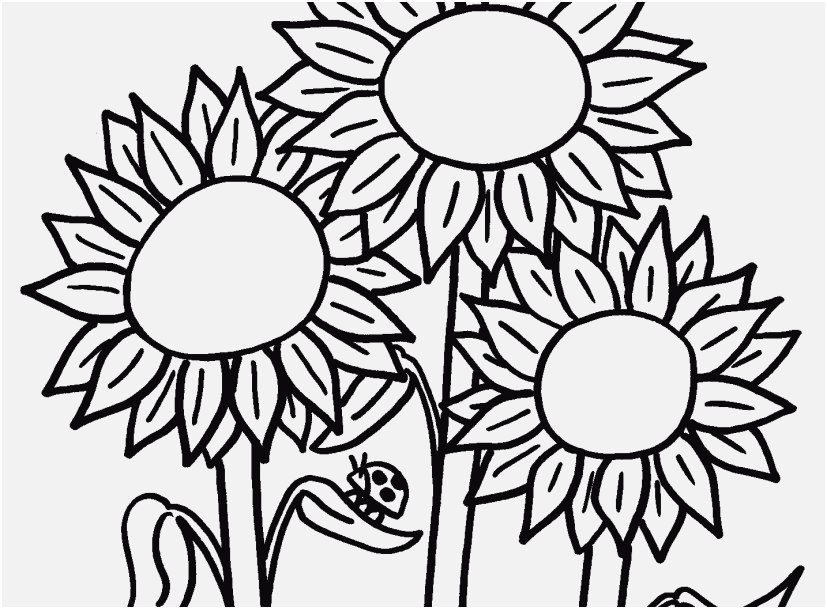 827x609 Bluebonnet Flower Coloring Page Graphic Wildflower Coloring Pages