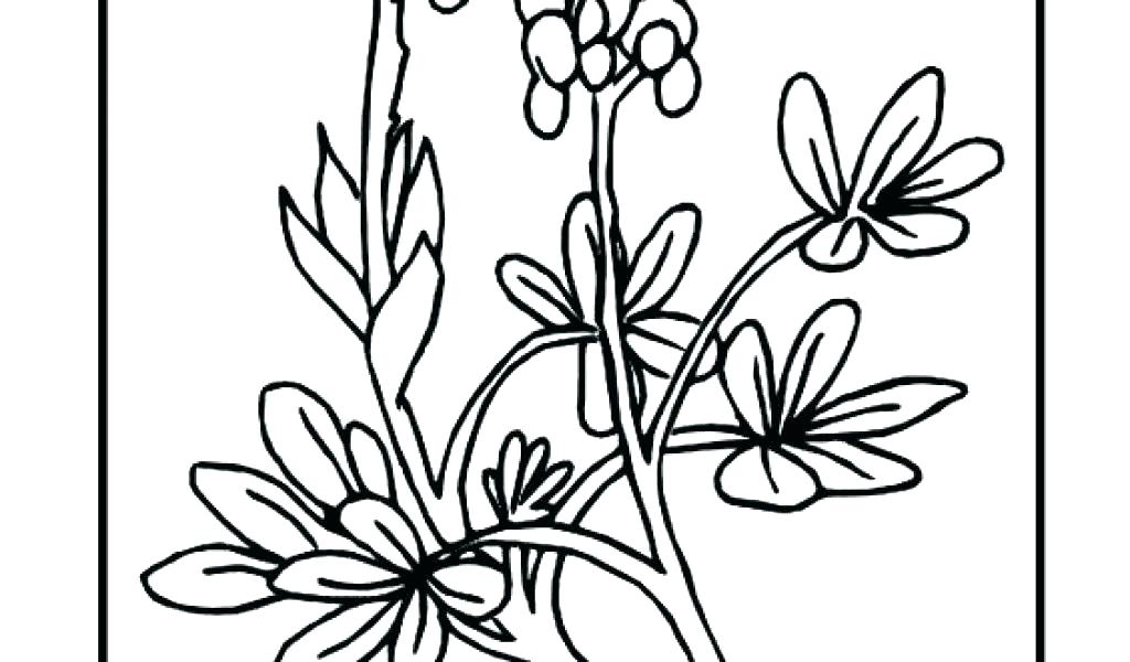 1024x600 Coloring Pages For Boys Flower Kids Gorgeous Poinsettia Page