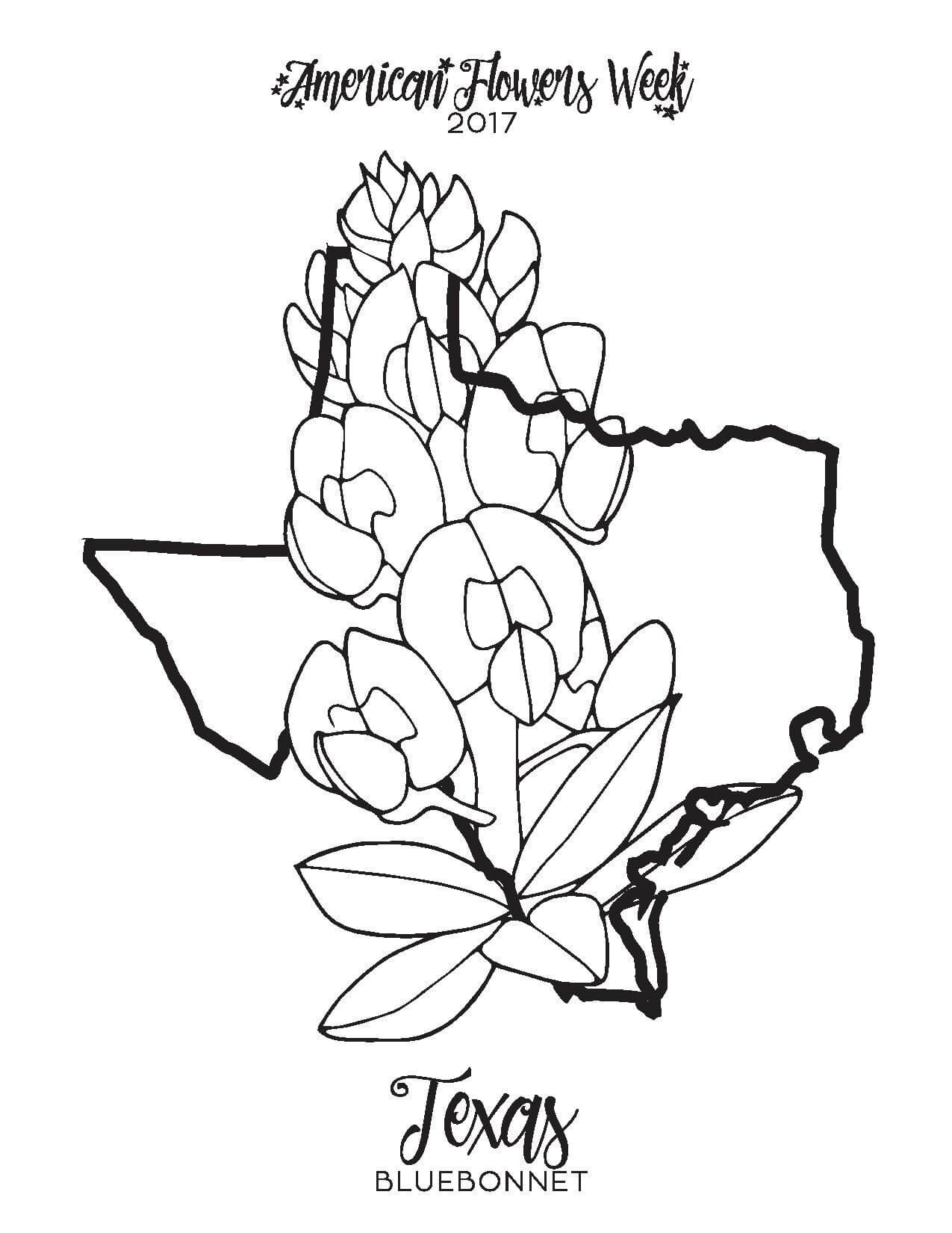 1275x1650 Introducing Texas Bluebonnet Coloring Page Fre
