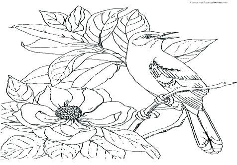 476x333 Mockingbird Coloring Page Mockingbird Coloring Page Bluebonnet