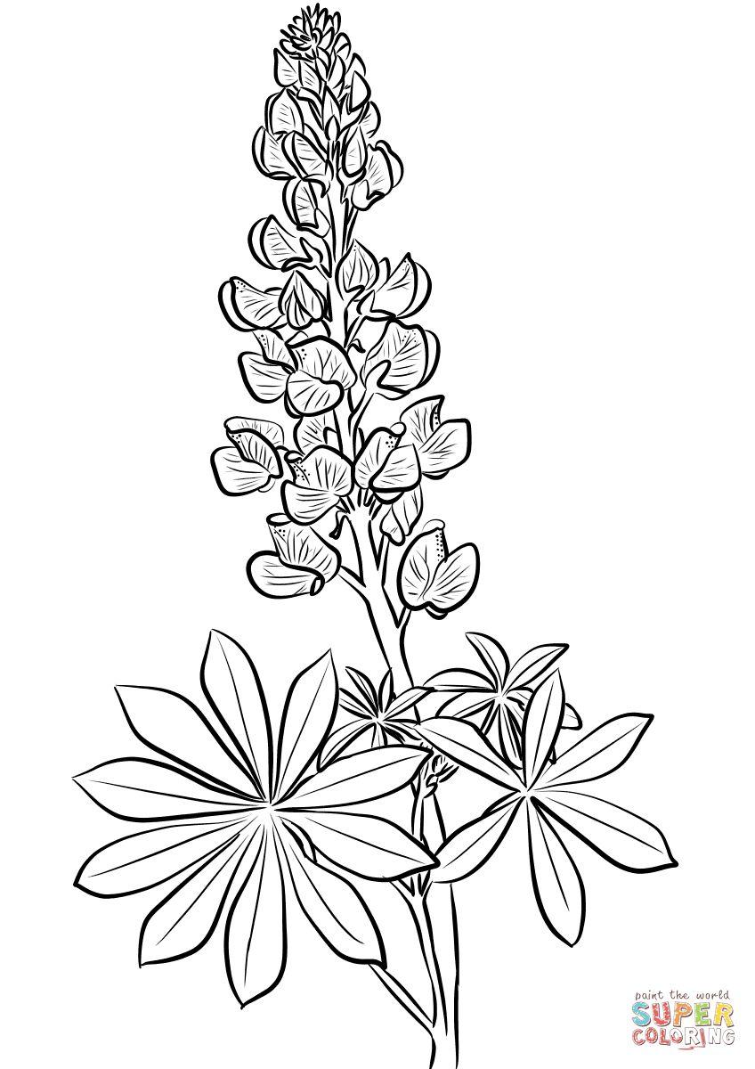 848x1200 Perspective Bluebonnet Coloring Page Bluebonnet Flower Coloring