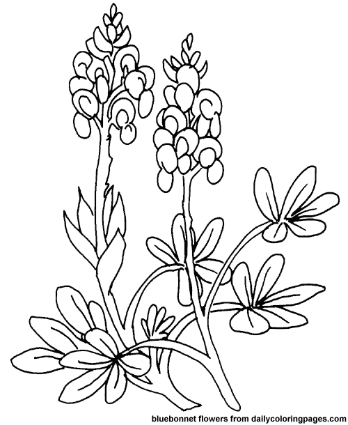 500x610 Flower Page Printable Coloring Sheets Free Coloring Pages