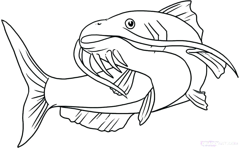 974x605 Catfish Coloring Page Coloring Page Of Cartoon Catfish Coloring