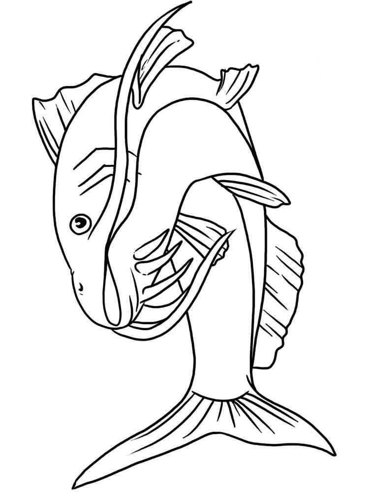 750x1000 Catfish Coloring Page Interesting Hd Wallpapers Catfish Coloring