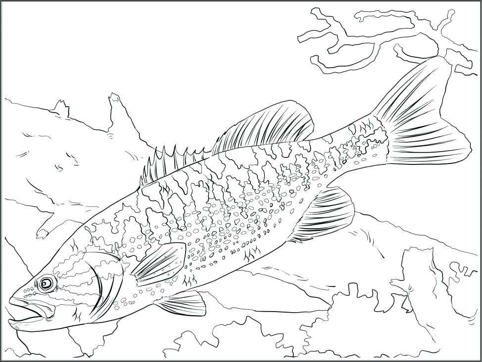 974x733 Freshwater Fish Marvelous Freshwater Fish Coloring Pages