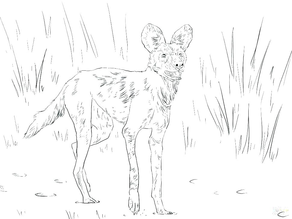 970x728 Wild Animal Coloring Pages Wild Animal Coloring Pages Wild Boar
