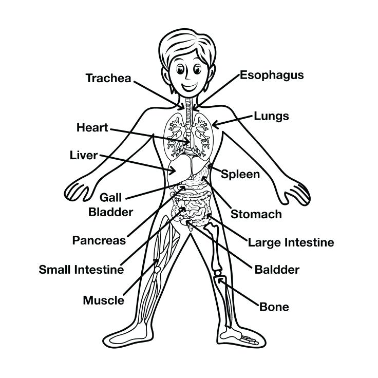 736x736 Coloring Pages Body Parts Body Parts Colouring Pages Preschool