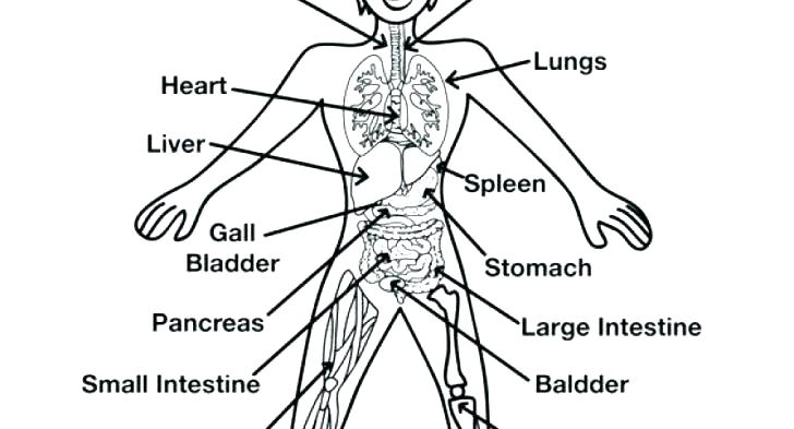 728x393 Body Coloring Pages Human Body Coloring Pages Body Outline