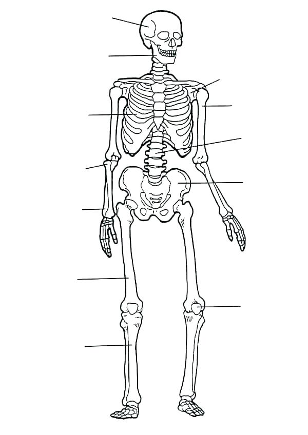 600x848 Body Coloring Page Body Coloring Pages Teeth Coloring Page Body
