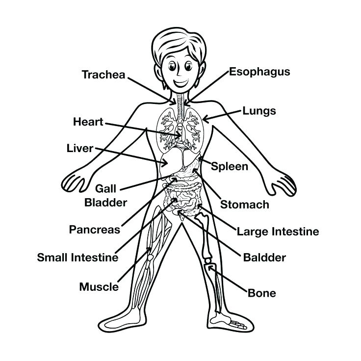 736x736 Parts Of The Body Coloring Pages For Preschool Coloring Page