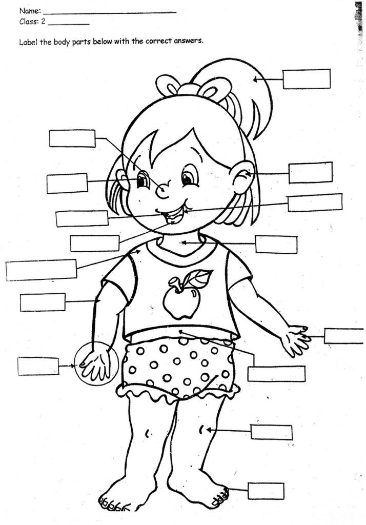 714x1024 Parts Of The Body Coloring Pages For Preschool Print Body Parts