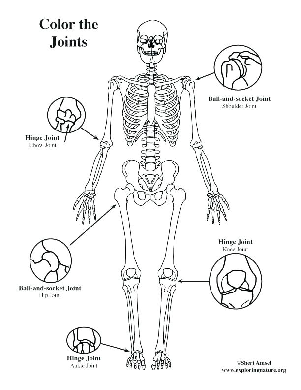 612x792 Body Coloring Pages Body Parts Coloring Pages Pdf
