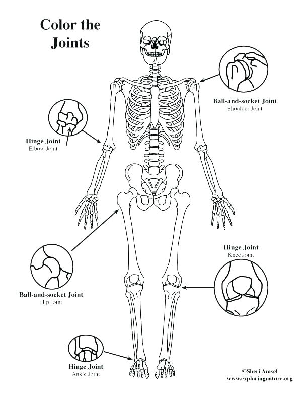612x792 Parts Of The Body Coloring Pages For Preschool Five Body Parts