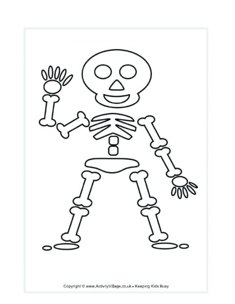 480x621 Printable Skeleton Template Large Body Parts Coloring Pages