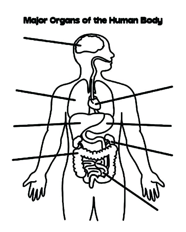 600x748 Body Coloring Page
