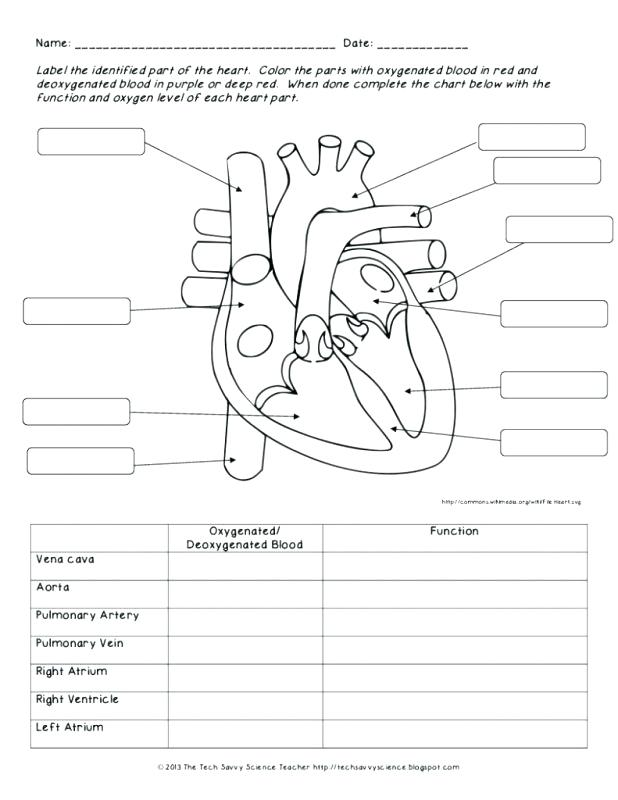 618x800 Circulatory System Coloring Page Body Systems Coloring Pages Human