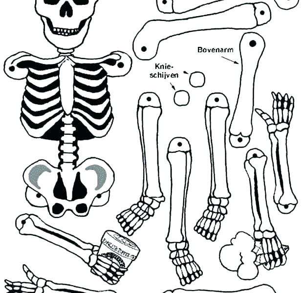 618x600 Human Body Coloring Pages Body Coloring Pages Human Coloring Pages