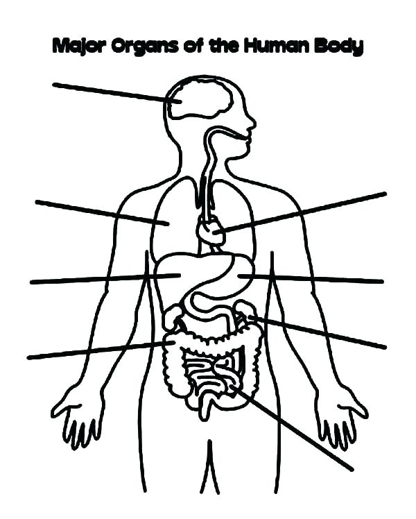 600x748 Coloring Body Systems Coloring Pages The Human Book Major Organs