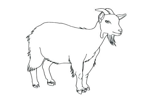 476x333 Goat Coloring Pages Boer Goat Coloring Pages