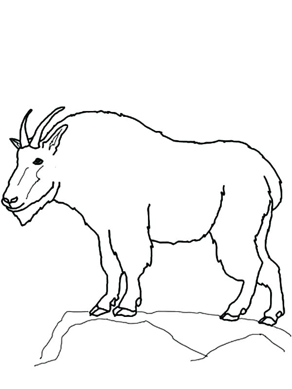 600x799 Goat Coloring Pages Goat For Coloring Mountain Free Printable Goat