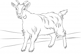 273x183 Goat Coloring Pages To Download And Print Inside Images Hd
