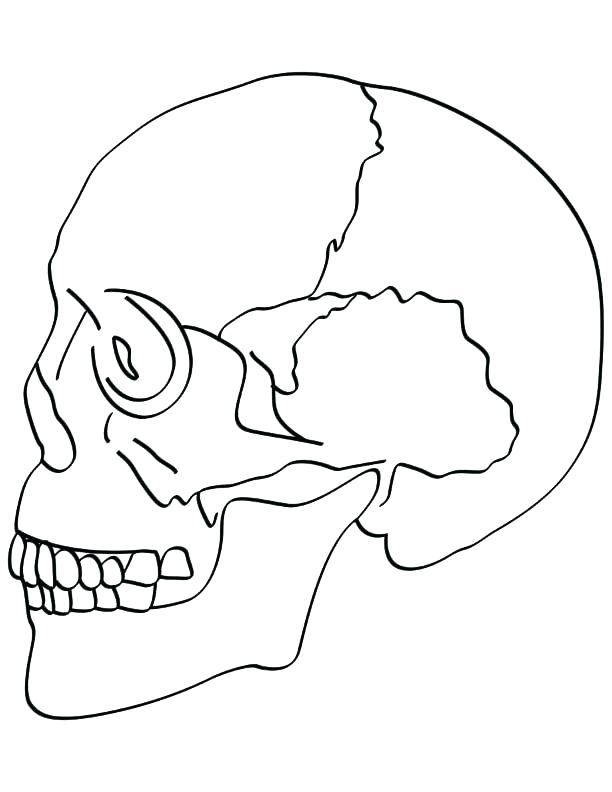 Bones Of The Skull Coloring Pages