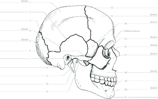 Bones Of The Skull Coloring Pages At Getdrawings Com Free For