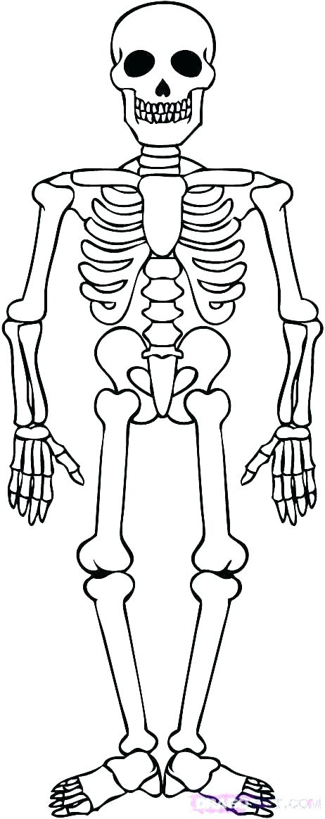 462x1163 Skull Coloring Pages Anatomy Anatomy Of A Bone Coloring Skull