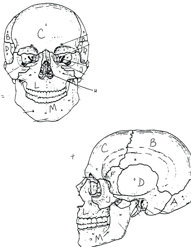 618x800 Bones Coloring Pages Skull Coloring Pages Anatomy Coloring Pages