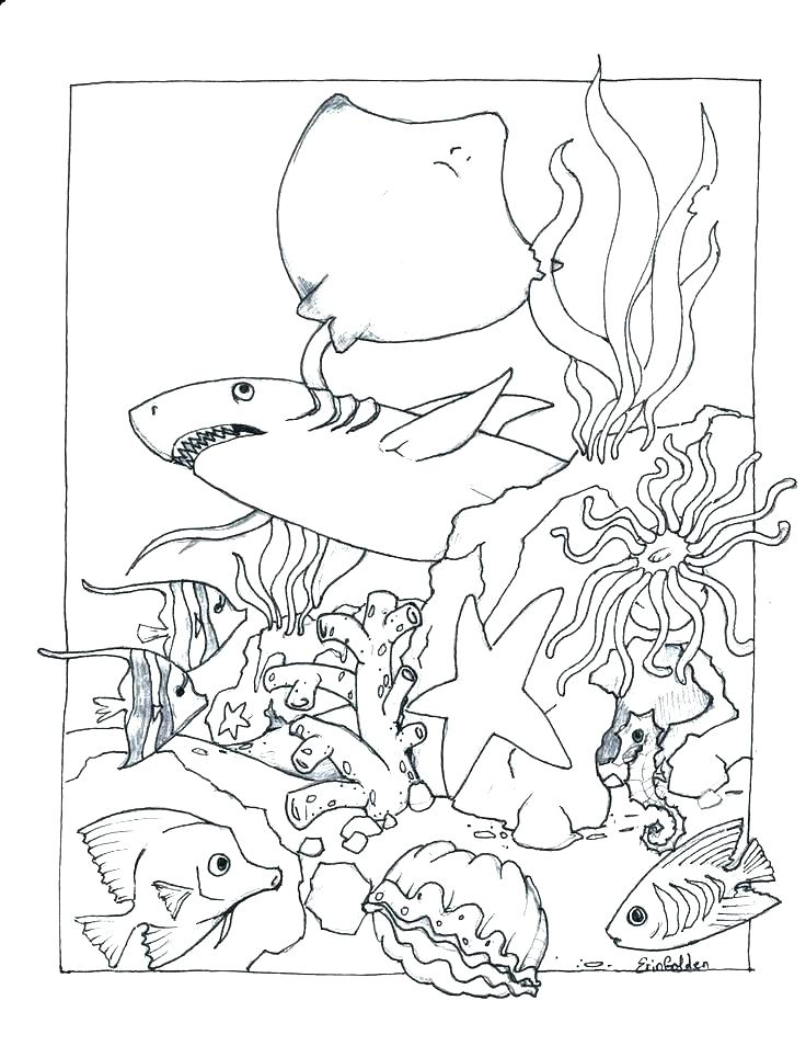736x954 Coloring Pages Of Ocean Animals Ocean Life Coloring Pages Ocean