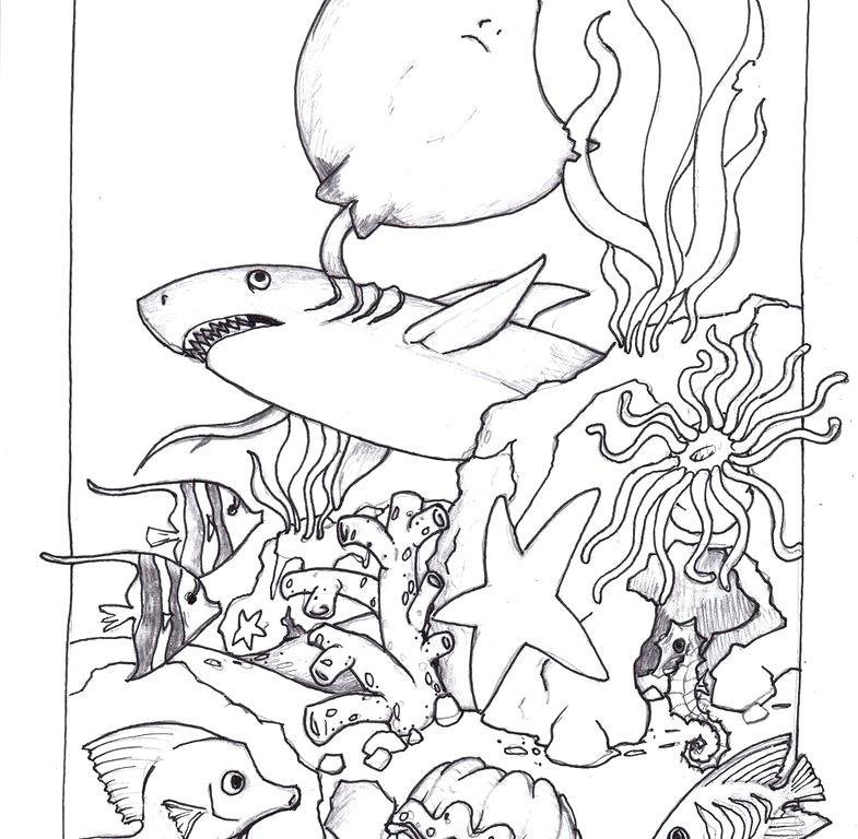 785x768 Ocean Life Coloring Pages Printable Amazing Ocean Habitat Coloring