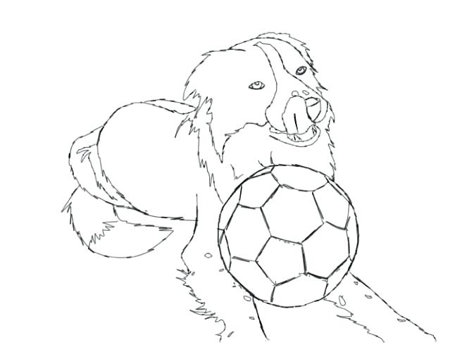 639x510 Border Collie Coloring Pages Collie Puppy Coloring Pages Border