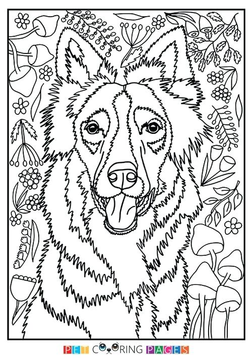 500x711 Border Collie Coloring Pages