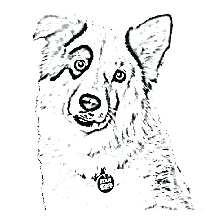 700x700 Collie Coloring Pages Dog Blog Coloring Pages Dog