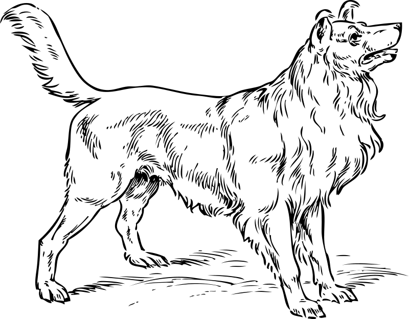 800x624 Collie Dog Coloring Page Dog Coloring Pages Org