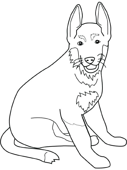 540x720 Coloring Pages Of Dogs Border Collie Coloring Pages Dog Color